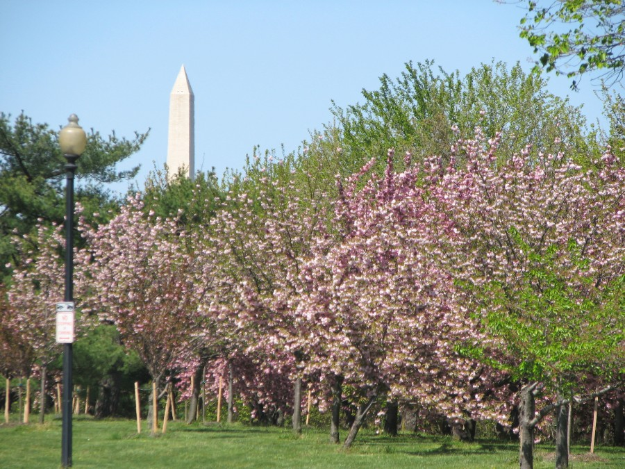 Blossoms & Monument